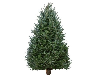 54% off Fresh-Cut Balsam Fir Christmas Trees w/ Delivery Dates