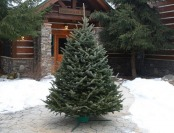 Up To 25% off Fresh Cut Christmas Trees Delivered to Your Door