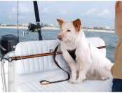 77% off Kurgo Auto Zip Line for Dogs