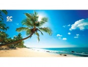 "81% off Sport N Care Beach Palm Tree Beach Towel, 60""L x 30"